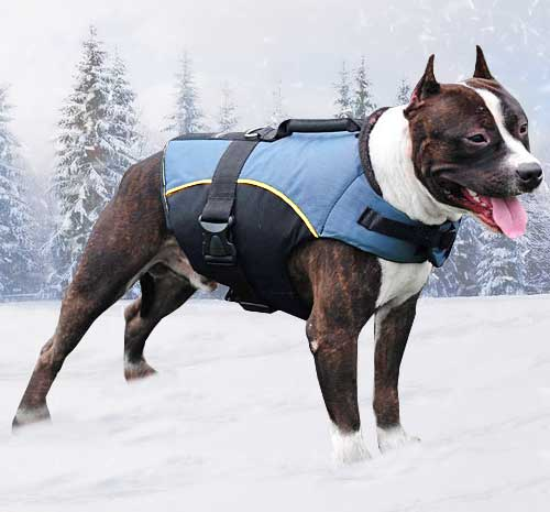 Pitbull Winter Coat