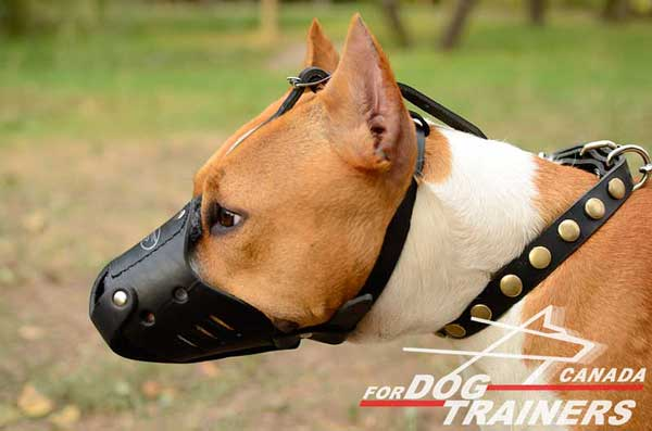 Leather Amstaff muzzle anti-barking breathable