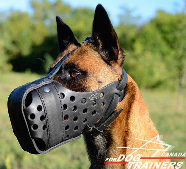 Adjustable Leather Muzzle for Belgian Malinois