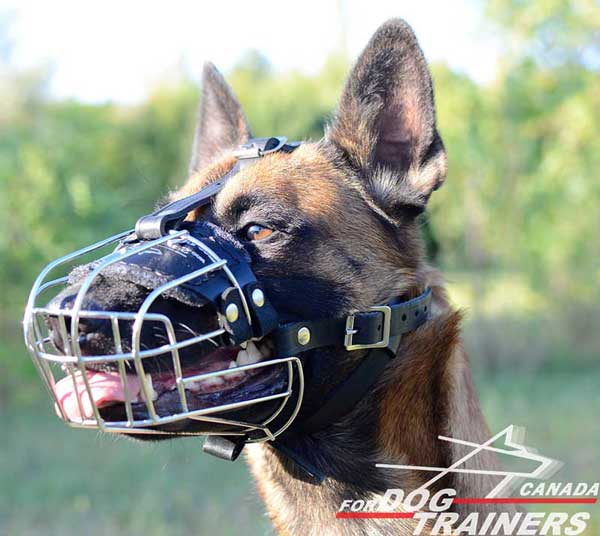 Wire Cage Muzzle for Belgian Malinois Training
