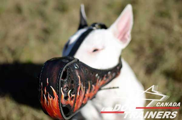 Leather Bull Terrier Muzzle with Painting for Walks