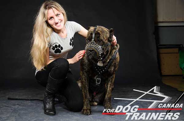 Leather Cane Corso Muzzle