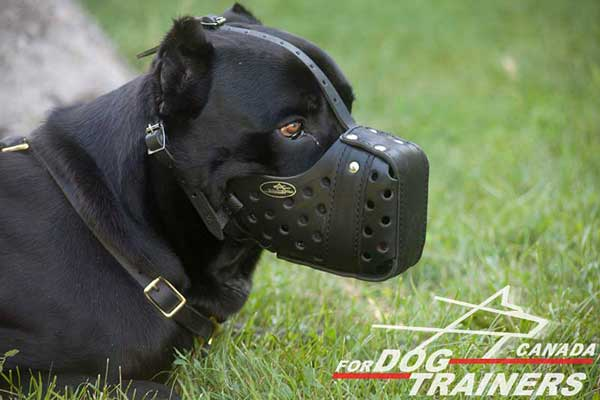 Leather Muzzle for Cane Corso