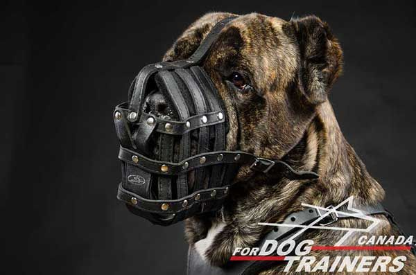 Cane Corso Leather Muzzle Basket with Perfectly Air Flow