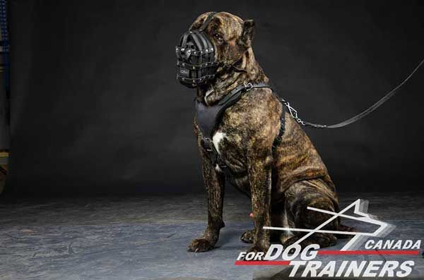 Leather Muzzle for Cane Corso Easy Adjustable