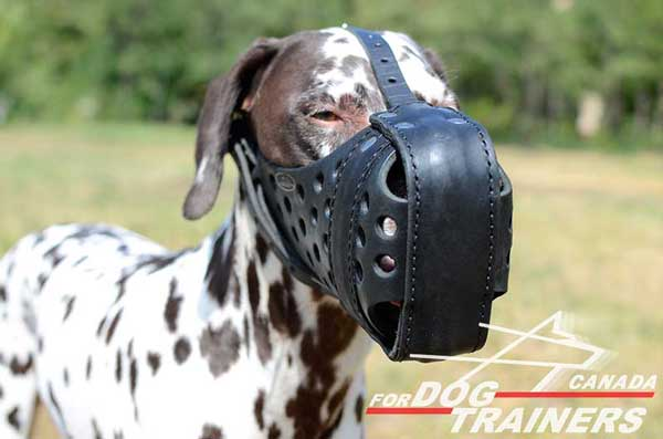 Leather Muzzle for Dalmatian Training