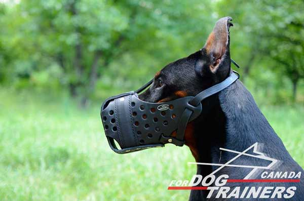 Leather Muzzle for Doberman Attack Training