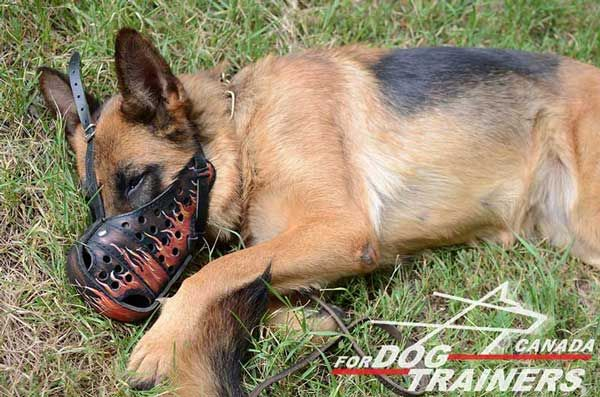 German Shepherd Leather Muzzle with Good Air Circulation
