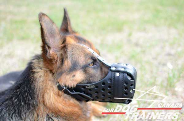 Agitation Leather Muzzle for German Shepherds