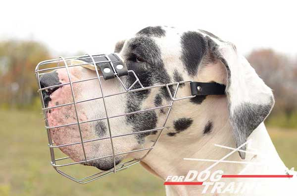 Wire Basket Great Dane Muzzle Easy-to-Adjust