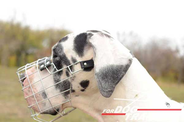 Great Dane Wire Basket Muzzle Breathable
