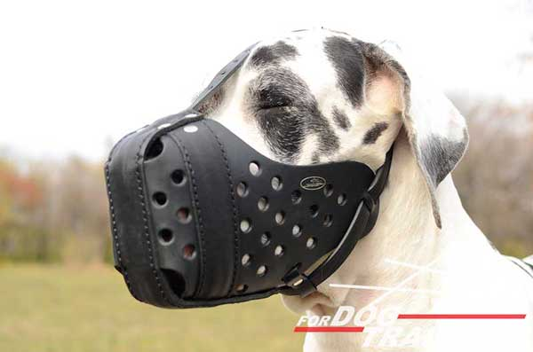 Leather dog muzzle for Great dane training and walking