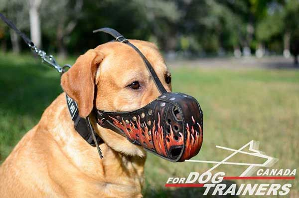 Leather Muzzle for Labrador with Painting