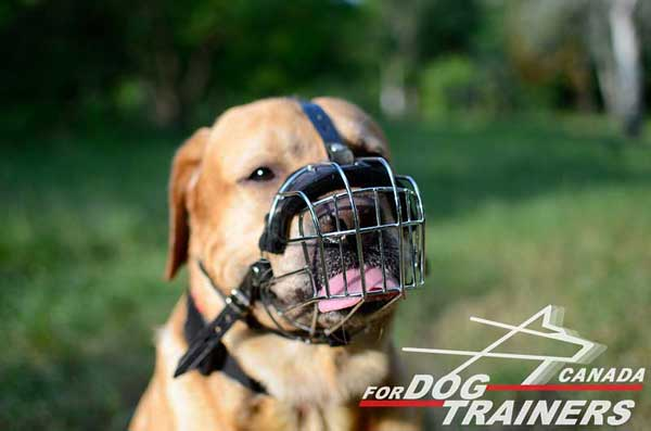 Wire Basket Muzzle for Labradors