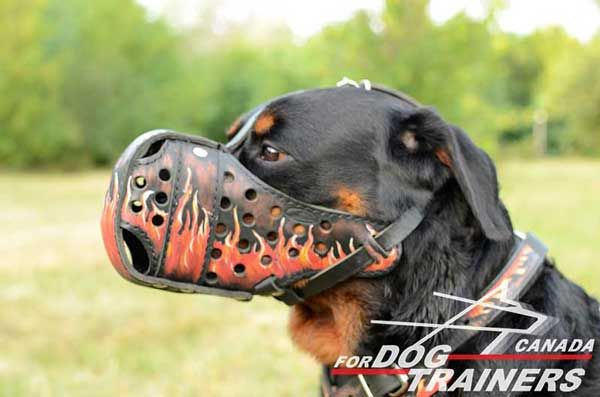 Leather Muzzle for Rottweiler Training