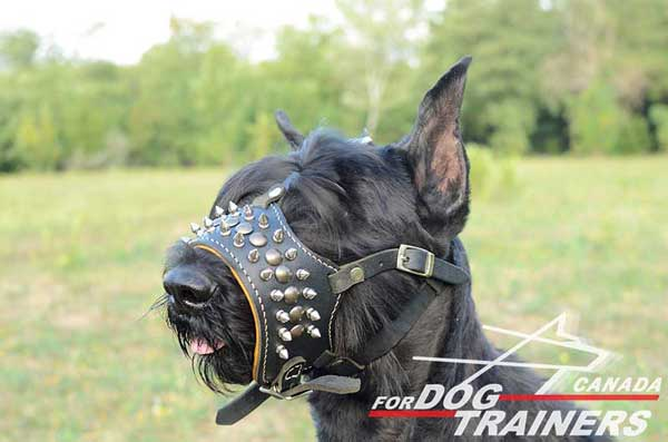 Adjustable Leather Muzzle for Riesenschnauzer
