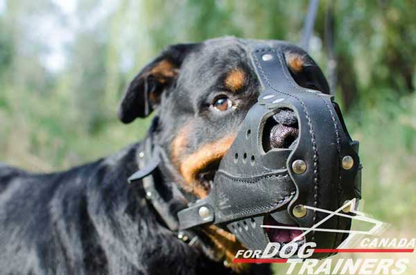 Rottweiler leather padded muzzle easy regulated