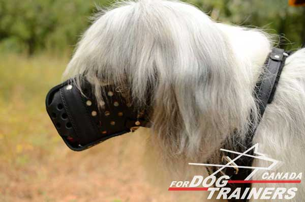 Leather dog muzzle for South Russian Shepherd agitation training
