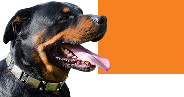 Choose Right Dog Collar for Dogs in Canada