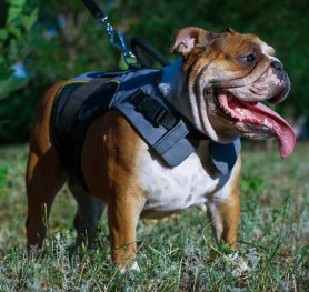 How to Choose a Dog Harness